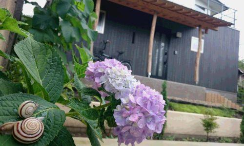 家と紫陽花とカタツムリ